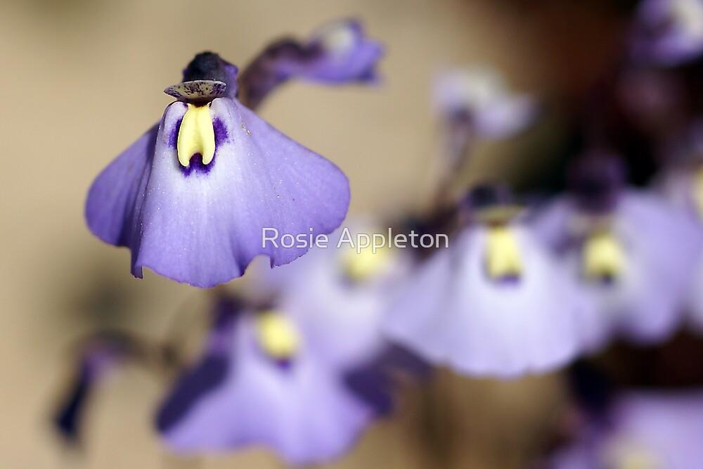"Violet Bladderwort (Fairy Apron/Petticoat) ""Utricularia dichotoma"" by Rosie Appleton"