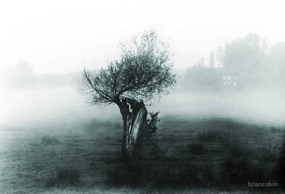 Tree in mist 1 by briancolvin