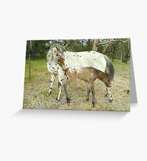 Appaloosa Mare & Foal Greeting Card