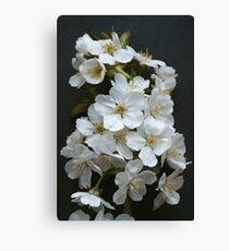 White Spring Blossom Canvas Print