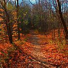 Amber Path by Debbie Stobbart