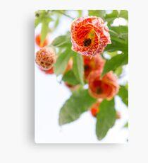 Floral 20 Canvas Print