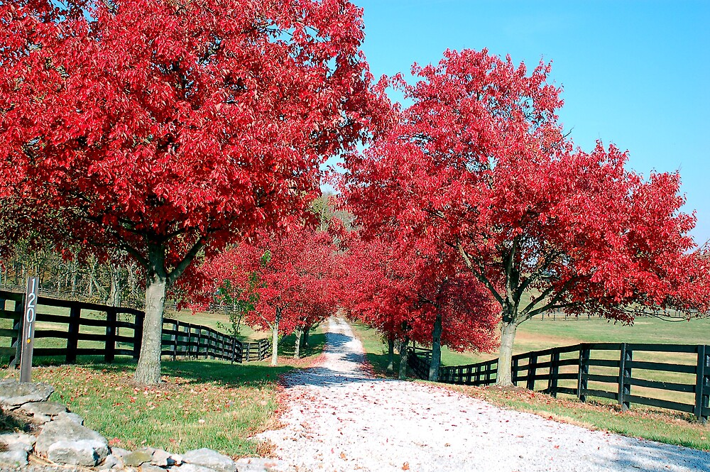 Red Road by kentuckyblueman