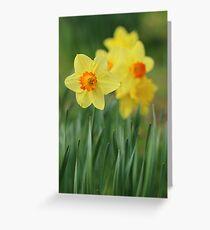 Shropshire Daffodils  Greeting Card