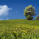 Italian Spring by paolo1955