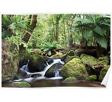 Beeches waterfall, Marysville Poster