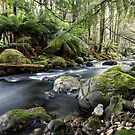 Meeting of the Waters, Beeches, Marysville, Victoria by Vicki Moritz