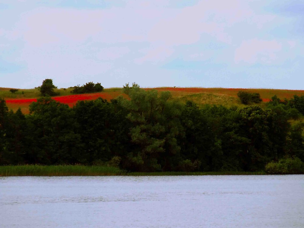 Red Field by panasonik