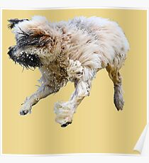 The Shaggy Dog Poster