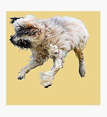 The Shaggy Dog Photographic Print