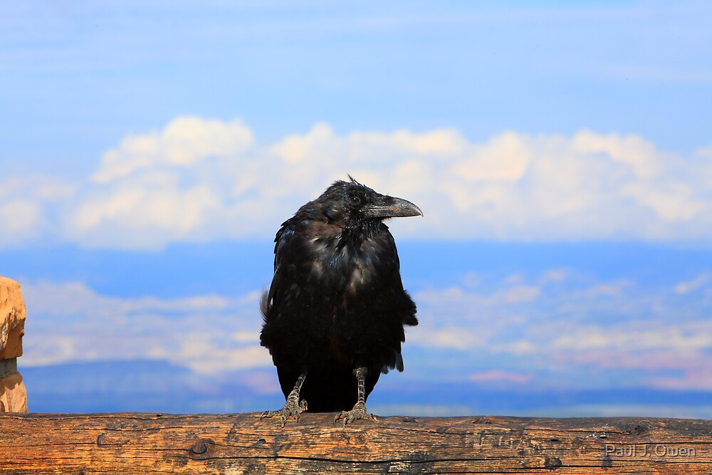 """The Old Raven"" at Bryce Canyon, Utah  by Paul J. Owen"
