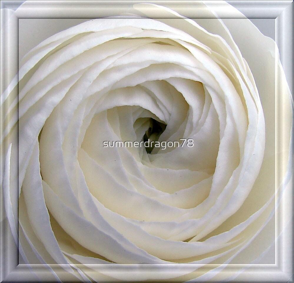 Rose by summerdragon78