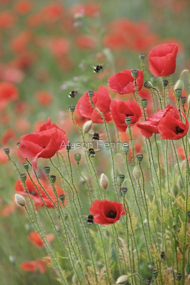 Busy Bees and Poppies by Alyson Fennell