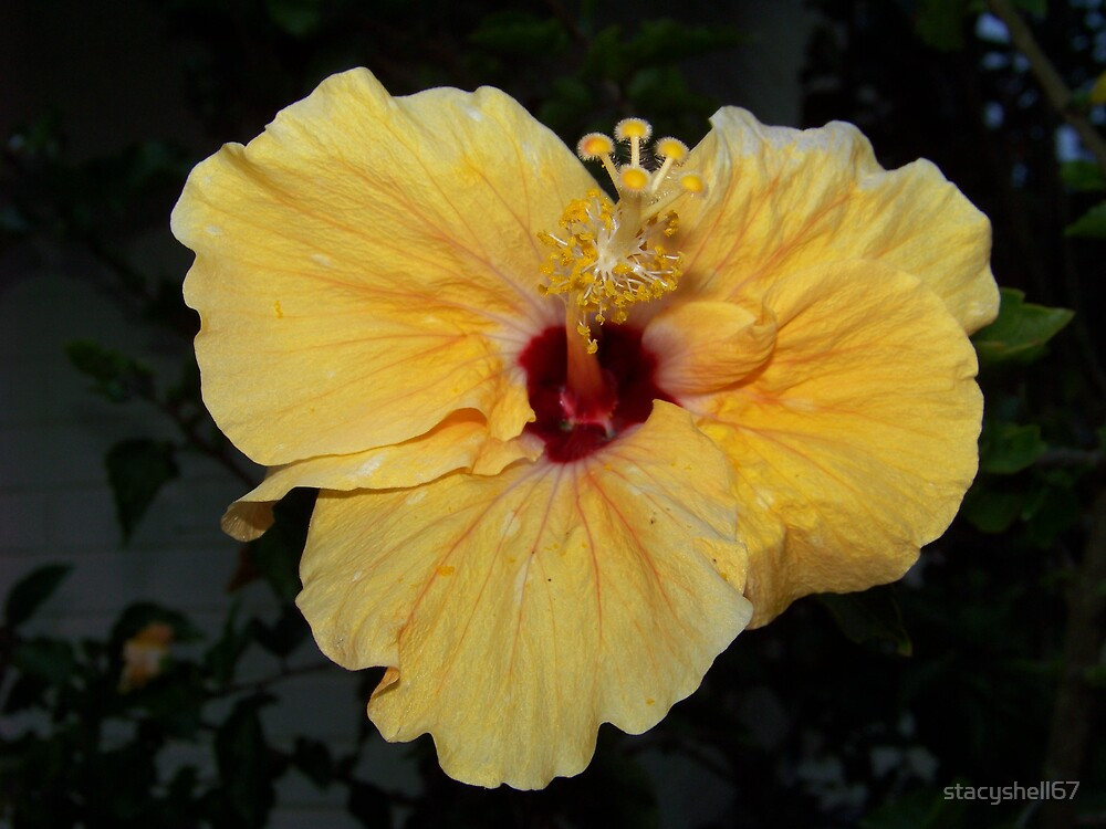 Yellow Hibiscus by stacyshell67