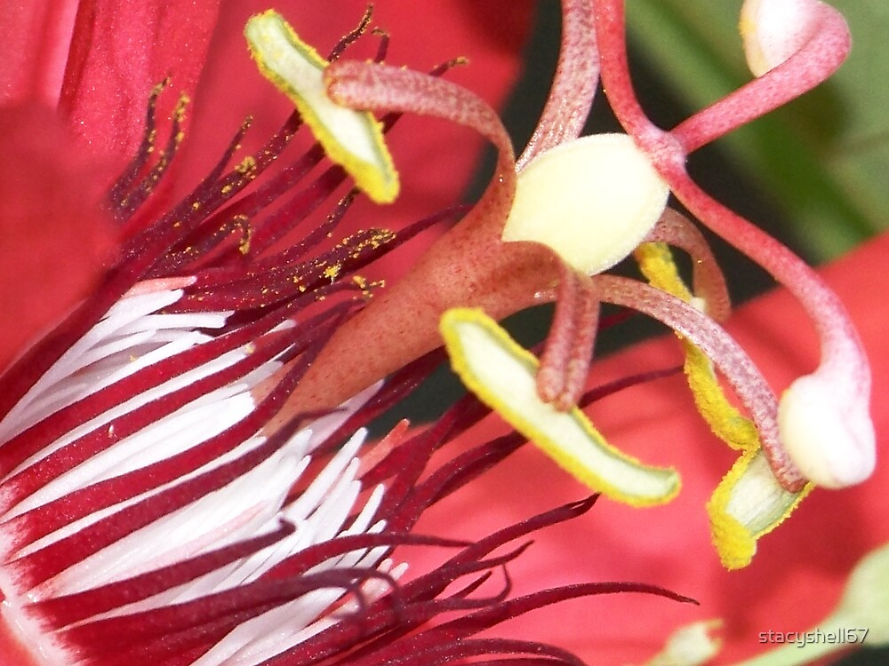 Red Passion Flower by stacyshell67