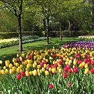 Mehrfarbige Tulpen - Keukenhof Gardens von BlueMoonRose