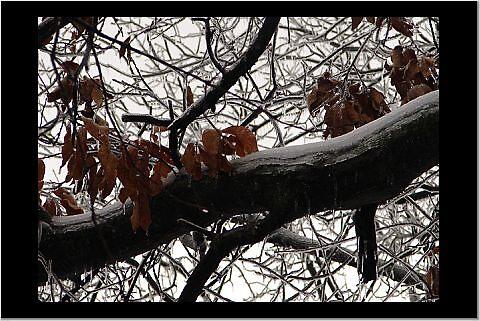 Ice Tree by danabee