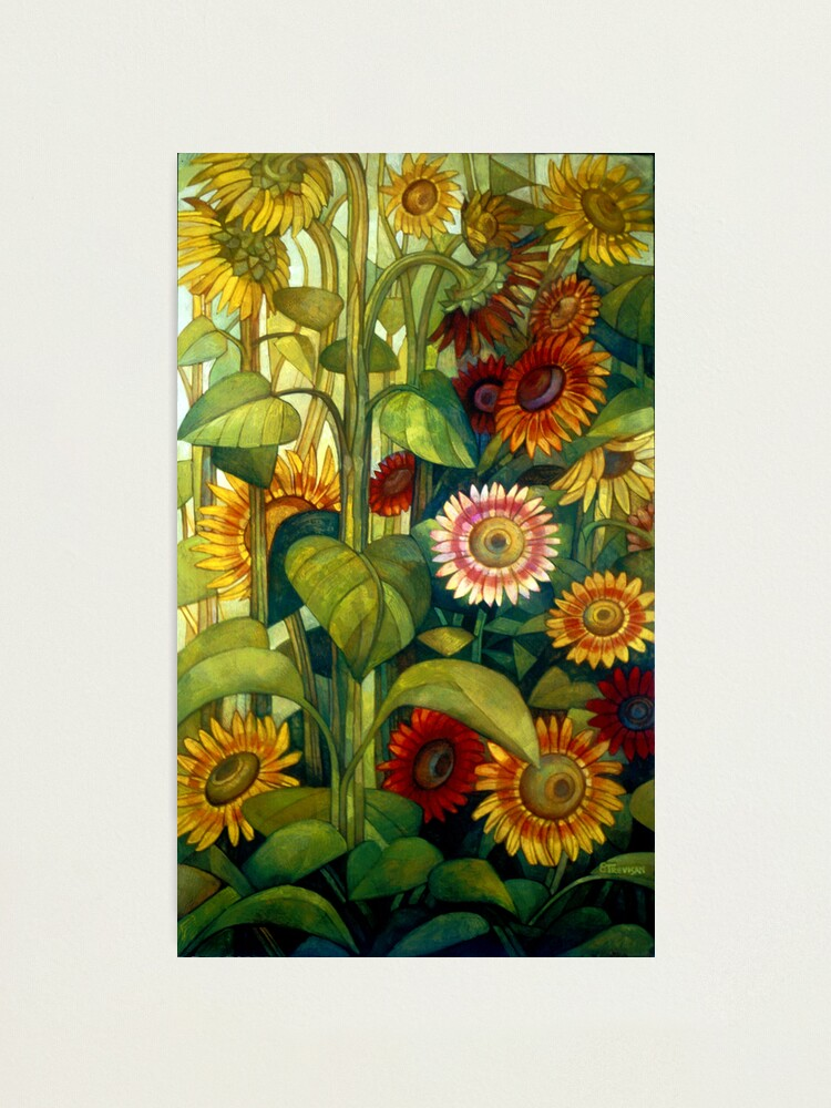 Alternate view of sunflowers Photographic Print