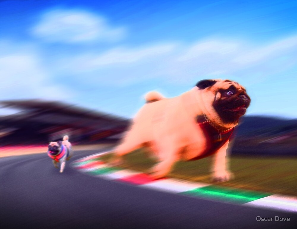 Pug Winning Race by Oscar Dove
