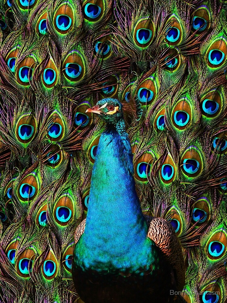 This peacock is watching you! by BonniePhantasm