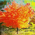 The Glory of Fall by Deborah Dillehay