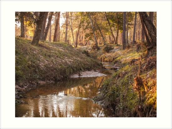A creek in the morning by SacreBlueHeron