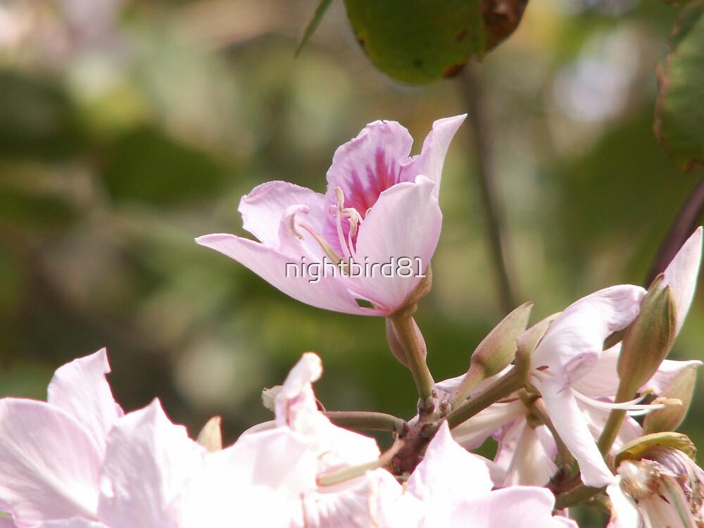 Pink & White flower  by nightbird81