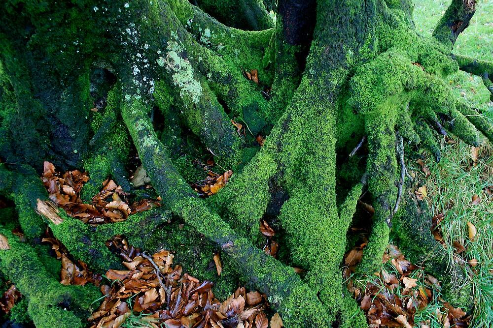 Rooted 15 by Amanda Gazidis
