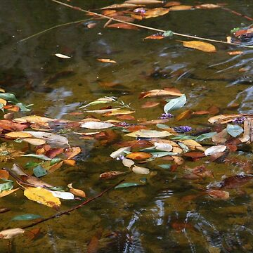 Floating Leaves by agnessa38