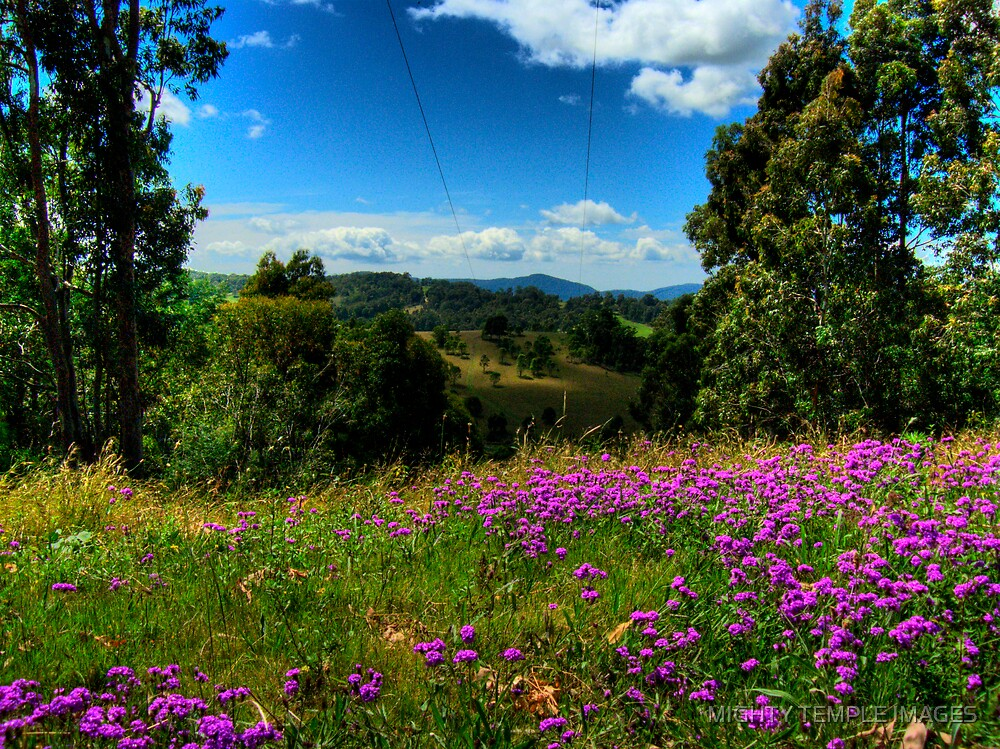 """Not """"Quite"""" Lavender by MIGHTY TEMPLE IMAGES"""