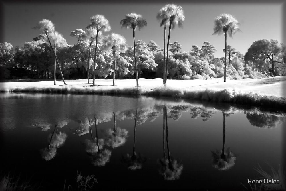 9 Palms by Rene Hales