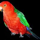 Male King Parrot #2 by Bev Pascoe