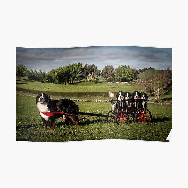 Bernese Mountain Dog & Puppies Poster