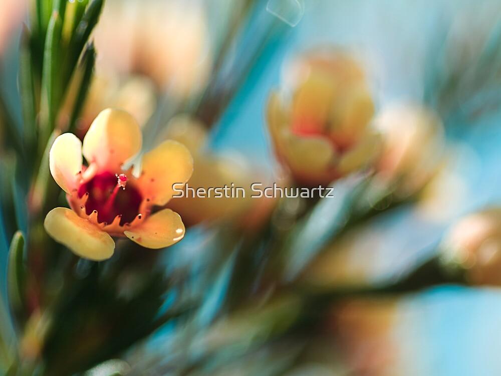 Softly blowing... by Sherstin Schwartz