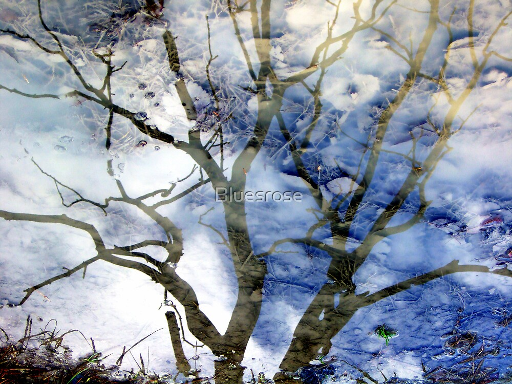 Ice puddle reflections by Bluesrose