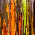 Abstract of bark on a Rainbow Eucalyptus Tree by photosbyflood