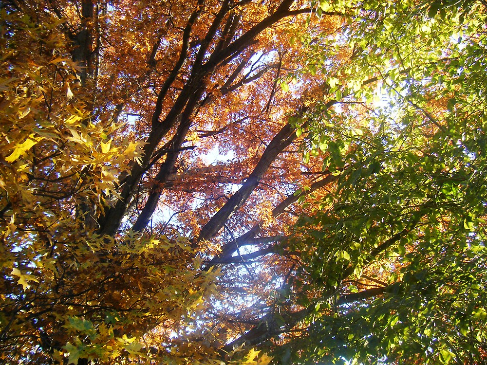 Fall Leaves by bangogirl