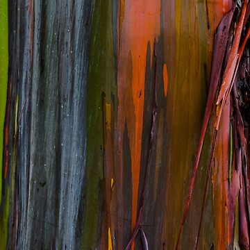 Abstract of Bark on a Rainbow Eucalyptus Tree 2 by photosbyflood