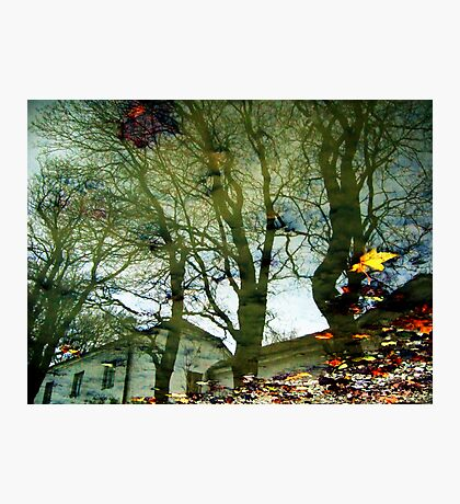 Autumn puddle Photographic Print