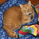 Dropped Quilt ~ Cat Opportunity! by SummerJade