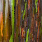 Abstract of Bark on a Rainbow Eucalyptus Tree 3 by photosbyflood