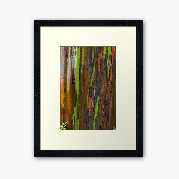 Abstract of Bark on a Rainbow Eucalyptus Tree 3 Framed Art Print
