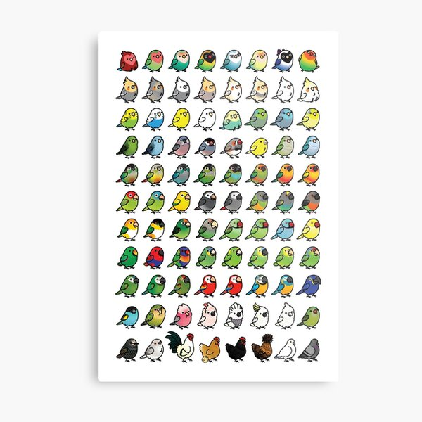 The Chubby Bird Collection Metal Print