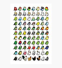 The Chubby Bird Collection Photographic Print