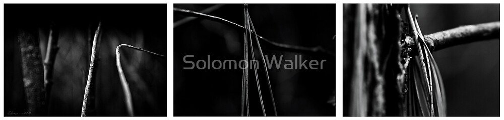 The Forest in Autumn Up-Close  by Solomon Walker