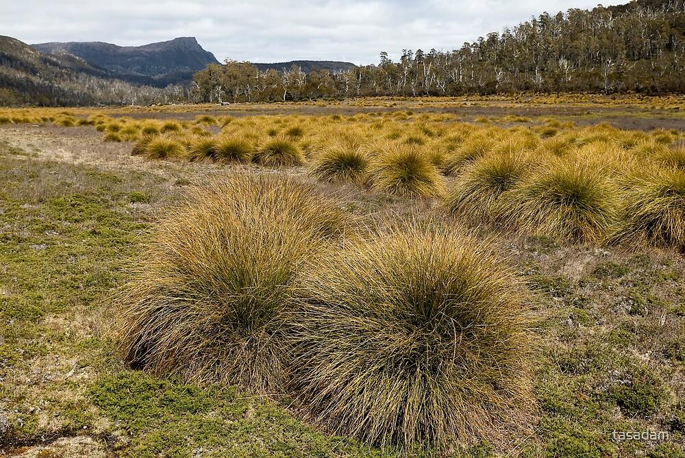 Buttongrass Plains, near Lake Bill, Tasmania by tasadam