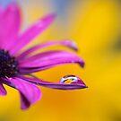 Droplet by Jill Ferry