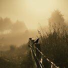 Morning by Jill Ferry