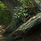 Trail at Chimney Rock, NC by Anna Lisa Yoder