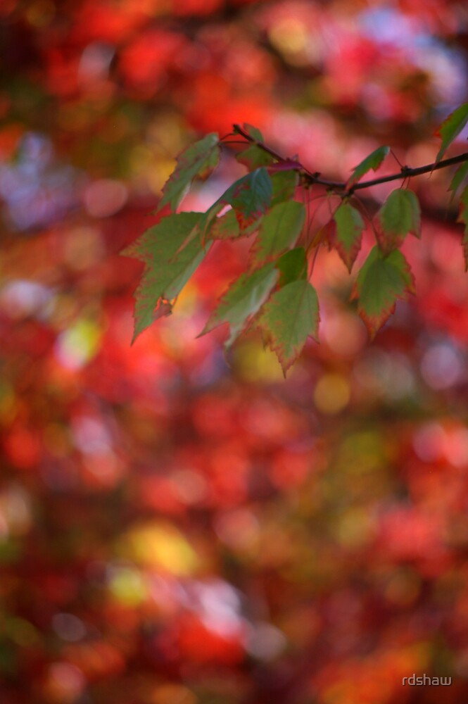 Stained Glass Leaves by rdshaw
